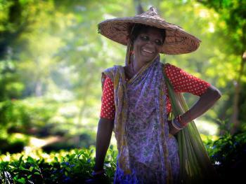 孟加拉的采茶女11