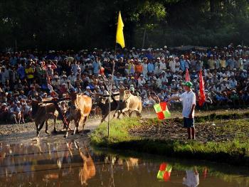 越南安江的赛牛节05