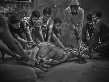 孟加拉宰牲节11