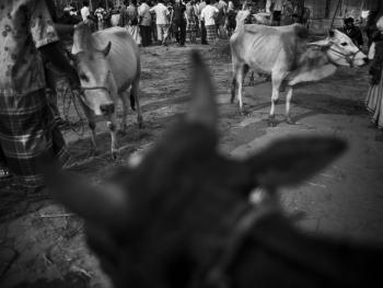 孟加拉宰牲节06