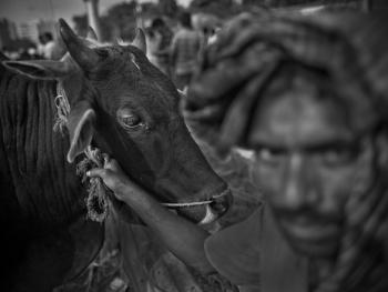 孟加拉宰牲节07