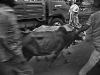 孟加拉宰牲节09