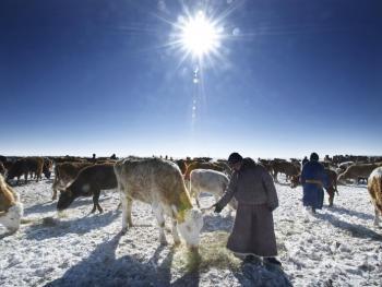 蒙古族兴畜节03