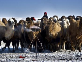 蒙古族兴畜节06