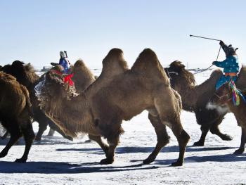 蒙古族兴畜节08