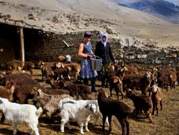 我的羊群我的家10