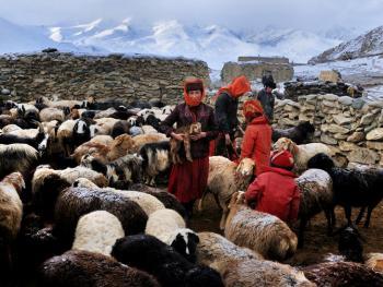 我的羊群我的家