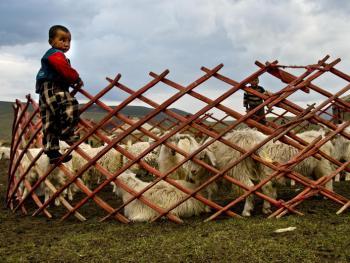 我的羊群我的家07