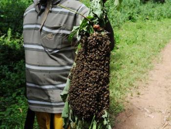 寻找蜂王09