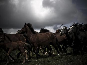 加利西亚的捕野马01