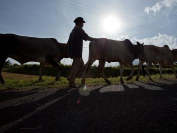 苏门答腊赛牛节12