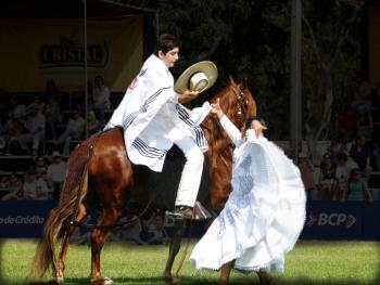 马背上的求爱舞5