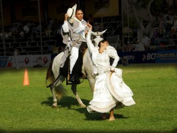 马背上的求爱舞7