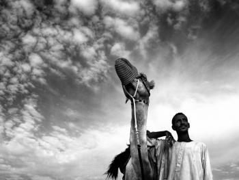 阿联酋的骆驼节BP12