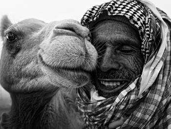 阿联酋的骆驼节BP13