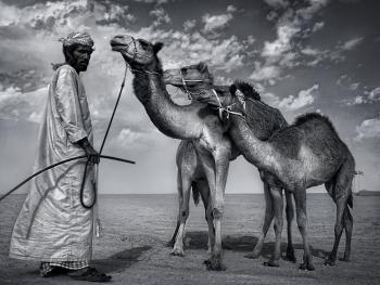 阿联酋的骆驼节BP14