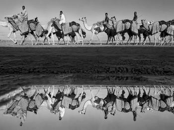 阿联酋的骆驼节BP02