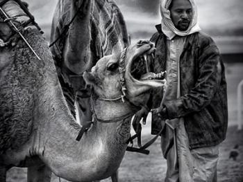 阿联酋的骆驼节BP03