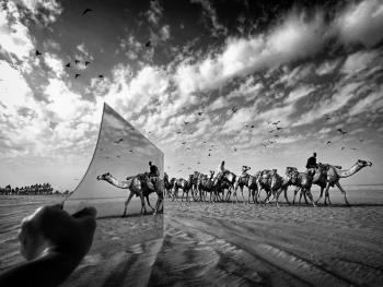 阿联酋的骆驼节BP04