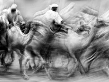 阿联酋的骆驼节BP06