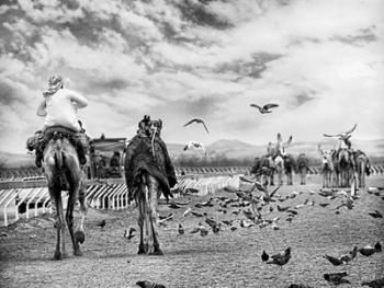 阿联酋的骆驼节BP07