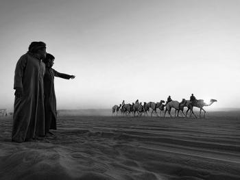 阿联酋的骆驼节BP08