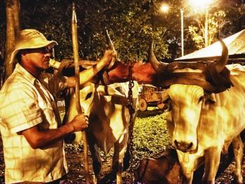 哥斯达黎加牛车游行