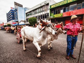 哥斯达黎加牛车游行07
