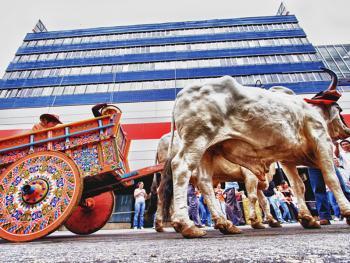 哥斯达黎加牛车游行09