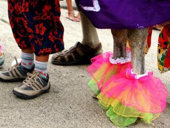 哥伦比亚驴子节12