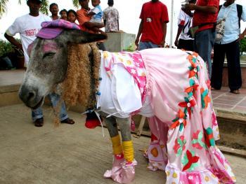 哥伦比亚驴子节05