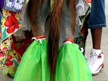 哥伦比亚驴子节06