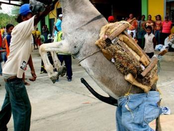哥伦比亚驴子节08