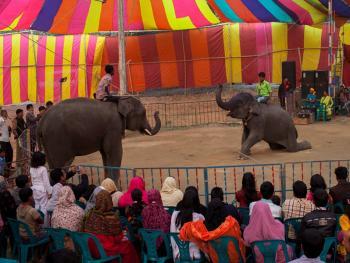 孟加拉国的传统马戏12