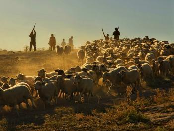 土耳其赛羊节