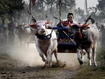 印尼赛牛3