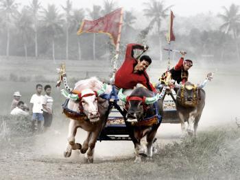 印尼赛牛6
