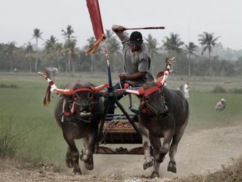 印尼赛牛7