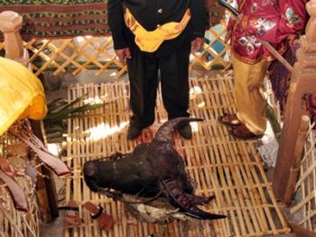 印尼凯里人的割礼09
