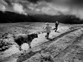 喀尔巴仟山牧羊人