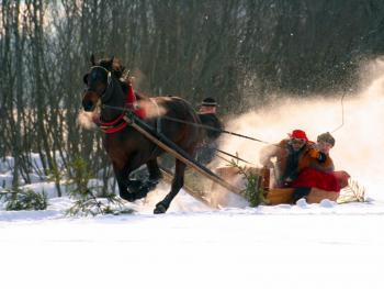 马拉雪橇比赛10