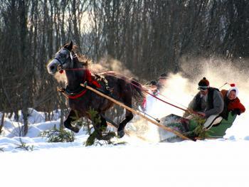 马拉雪橇比赛11