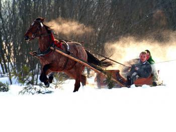 马拉雪橇比赛12