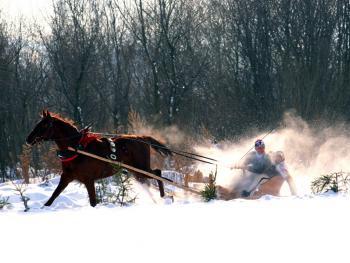 马拉雪橇比赛14