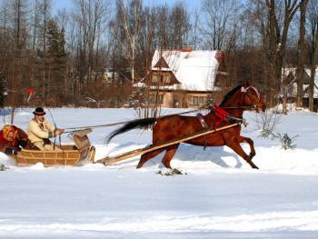 马拉雪橇比赛01