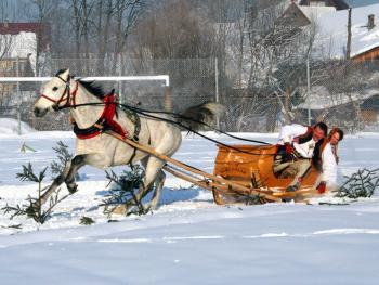马拉雪橇比赛02