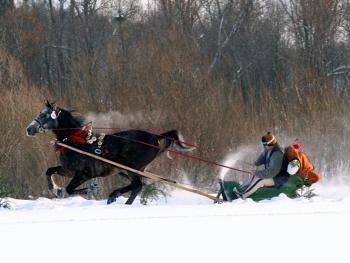 马拉雪橇比赛05
