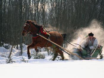 马拉雪橇比赛07