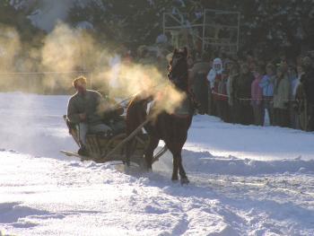 马拉雪橇比赛08