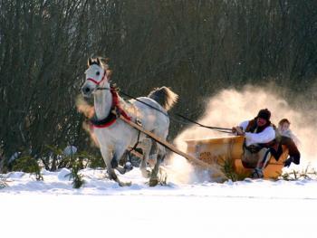 马拉雪橇比赛09